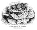 Laitue d'hiver de Trémont Vilmorin-Andrieux 1904.png