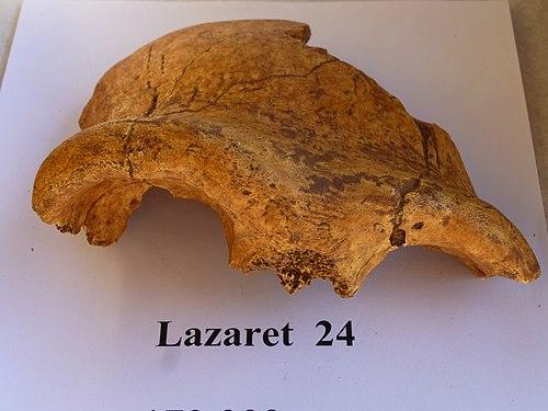 Lazaret 24 frontal bone 01.jpg