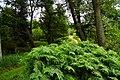 Leśna dróżka - panoramio.jpg