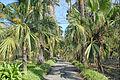 Le Jardin botanique de Palerme (6896302556).jpg