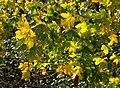 Leaves near Wren Park - geograph.org.uk - 1604664.jpg