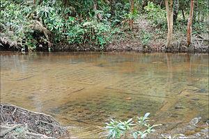 Les linga dans le lit de la rivière sacrée (Phnom Kulen) (6824988525)