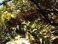 Levada 25 Fontes, Madeira, Portugal, June-July 2011 - panoramio (25).jpg