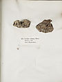 Lichenes Helvetici IX X 1833 018.jpg
