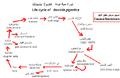 Life-cycle-of-fasciola-gigantica.png