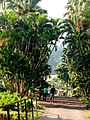 Limbe botanical gardens.jpg