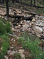Little Bear Trail flood damage (9361768294).jpg