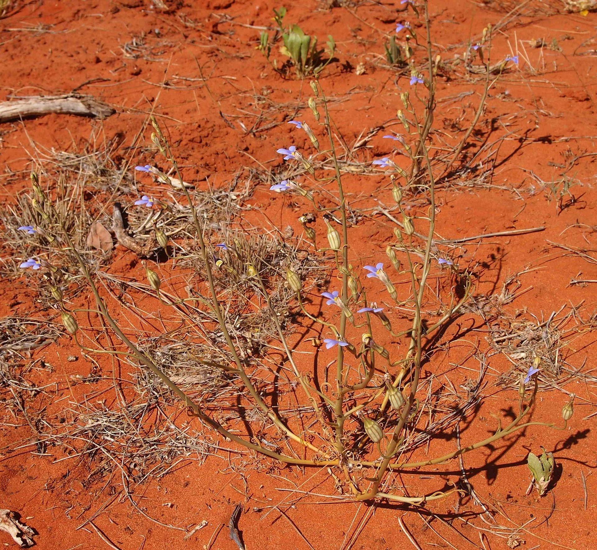 Soil ph wikipedia the free encyclopedia autos post for Soil encyclopedia