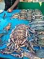 Lobstar fish.jpg