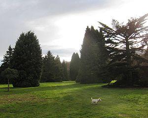 Longstock Park - Image: Longstock pinetum 2