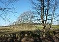 Looking north towards Bee Low Wood - geograph.org.uk - 1616124.jpg