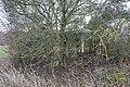 Loopholes behind the tree - geograph.org.uk - 1744720.jpg