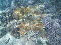 LordHoweIsland NorthBay Reef 07.JPG