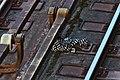 Lost On The Track Ii (215613017).jpeg