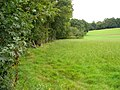 Lower Slopes of Albury Downs - geograph.org.uk - 547243.jpg