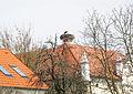 Lutzmannsburg Storchennest.jpg