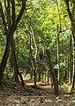 MAREDUMILLI - forest area.jpg