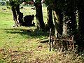 MOs810 WG 38 2016 (Blota) (Cemetery in Malta, gm. Krzeszyce) (7).jpg
