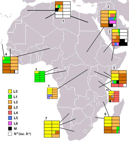 Macro-haplogroup L (mtDNA) | Revolvy