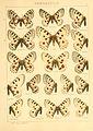 Macrolepidoptera01seitz 0035.jpg