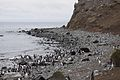 Magellanic Penguins (4312434189).jpg