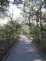 Magnolia Plantation and Gardens - Charleston, South Carolina (8555421867).jpg