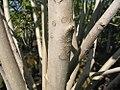 Magnolia x Jane 2zz.jpg