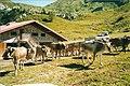 Malga Pramosio - panoramio.jpg