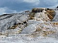 Mammoth Springs - panoramio (1).jpg