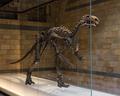 Mantellisaurus-NHM-2017-PNG-1002.png