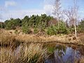 Marshland on Wildmoor Heath - geograph.org.uk - 704863.jpg