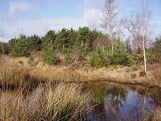 Wildmoor Heath