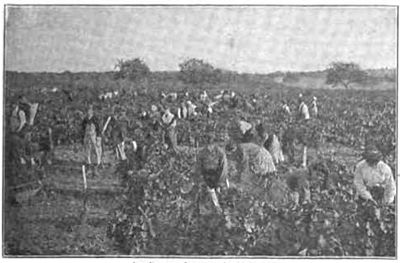 Maury Geography 105C vineyard.jpg
