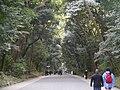 Meiji-jingu Wald.jpg