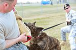 Military Working Dogs 110425-F-QY930-210.jpg