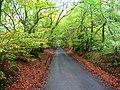 Minor road, Beecraigs. - geograph.org.uk - 65269.jpg