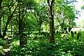 Minsk Mazowiecki, Poland - panoramio (81).jpg