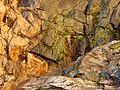 Molino Basin Waterfall - Flickr - treegrow (1).jpg