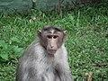 Monkey from Bannerghatta National Park 8561.JPG