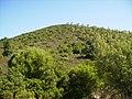 Monte - panoramio (14).jpg