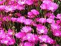 Monte Palace Tropical Garden DSCF0161 (4642523067).jpg