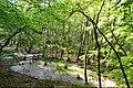 Moor Müritz-Nationalpark (1).jpg