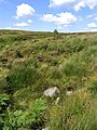 Moorland at Rotten Bush Sike - geograph.org.uk - 520619.jpg