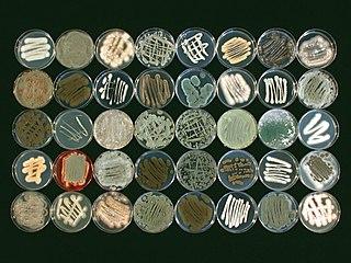 Marine fungi Species of fungi that live in marine or estuarine environments