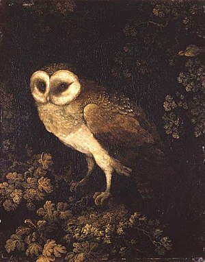 Moses Haughton the Elder - An Owl (ca. 1780–1790), oil on panel