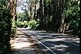 Mount Dandenong Tourist Road yet again (25701791398).jpg