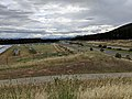 Mount Majura solar farm.jpg