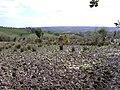 Muddy field at Fogart - geograph.org.uk - 157892.jpg