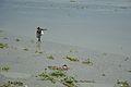 Mudlarker - Confluence - River Saraswati and River Hooghly - Sankrail - Howrah - 2013-08-11 1418.JPG