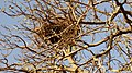 NIDO DE CHURRINCHE - panoramio.jpg